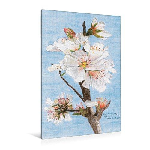 Premium Textil-Leinwand 80 cm x 120 cm  hoch, Mandelblütenzweig Algarve - Pastellkreide   Wandbild, Bild auf Keilrahmen, Fertigbild auf echter ... mit ihrer puren Schönheit. (CALVENDO Kunst) (Knoten Leinwand)