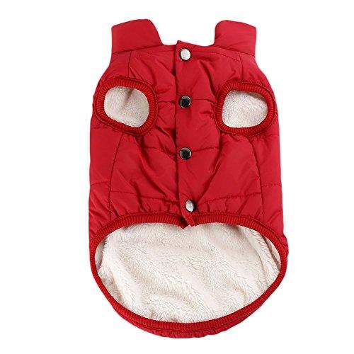 PanDaDa Winddichte Haustierhund Welpen Weste Jacke HaustierKleidung Warm Winter Mäntel Jacken Kostüme Kleider für kleinen Hund (Bowknot Muster Mode)