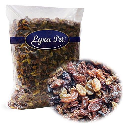 Lyra Pet GmbH 4260361036223