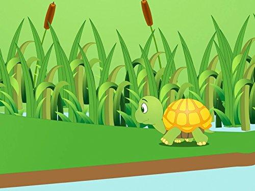 Tortoise Rhyme (Land Facts Fun)