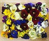 Fiori Commestibili BIOLOGICI - 120 VIOLETTE di colori misti in vaschetta alimentare di 23 cm x 15 cm x 1,5 cm - Coltivati in Toscana dall'azienda agricola Carmazzi