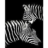 zhxx Pintar por Numeros Adultos Kit Un Par De Cebra De Peluche Animal Wedding Ation Imagen Artística Regalo para Niño sobre Lienzo Sin Marco 40X50Cm