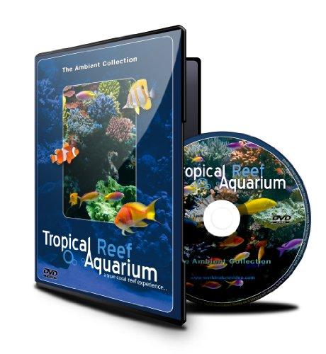 acquario-tropicale-2-ore-di-acquari-vincitori-di-premi