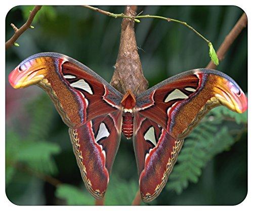 Mousepad bedruckt mit Schmetterling auf Ast