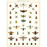Cavallini Natural History Insects Wrapping Paper