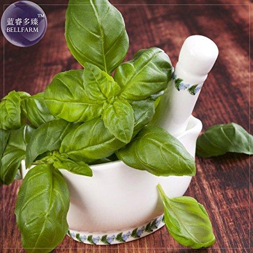 Pinkdose® 2018 Heißer Verkauf Davitu Genovese Basilikum Samen, 20 Samen, Die Superior Basilikum für Die Herstellung Der schmackhaftesten Pesto in Der Welt E4233