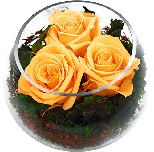 Rosen-te-amo Konservierte Rosen – ECHTE Blumen-Gesteck - Blumen-Strauß in der Vase, aus 3 haltbare-Rosen – unser EXKLUSIVES Blumen-Arrangement sind lange haltbar, handgemacht und mit Liebe gefertigt (Kugel-Vase, Apricot-Rosen)