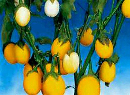15 semillas semillas plantas huevo Pascua se parece