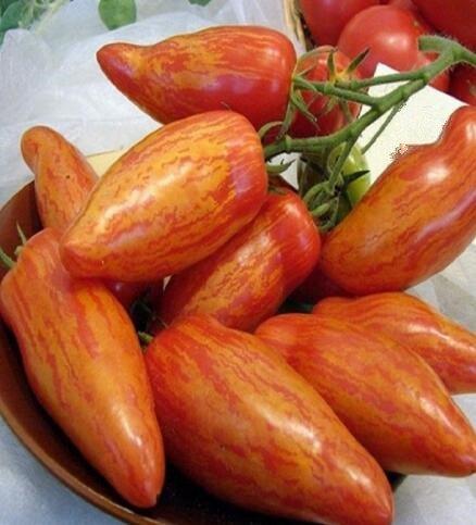 100 pcs/paquet Précipité nouvelles Plantes d'extérieur Promotion Jardin semences de tomates en pot fruits Bonsai Balcon de semences de légumes 15