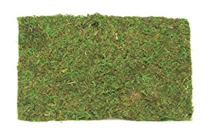 Glorex 6 2220 304 - Espuma de Placa (30 g), Color Verde