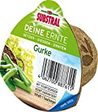 Substral Deine Ernte Saatkegel Paprika Kegel aus Keimsubstrat, Dünger und Samen, 1 Stück