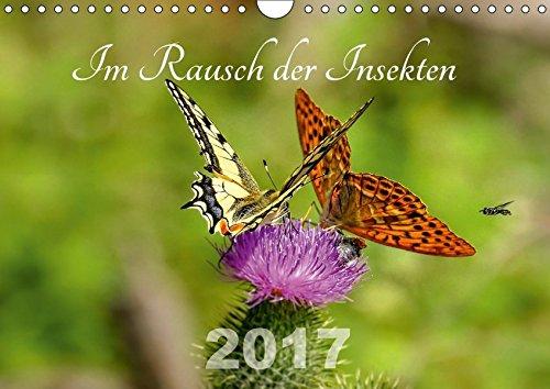 Im Rausch der Insekten (Wandkalender 2017 DIN A4 quer): Die Insektenwelt. (Monatskalender, 14 Seiten) por Leona Haase