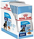 Royal Canin Maxi Puppy / Junior Wet Dog Food 40 Packs 140g Each Specially Developed For Young And Growing Large Breed Dog Up To 15 Months Old