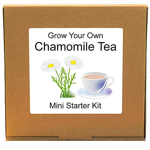 Grow Your Own Chamomile Herbal Tea Making Plant Growing Kit - Unusual, Unique and Quirky Complete Beginner Friendly Indoor Gardening Gift for Men, Women or Children