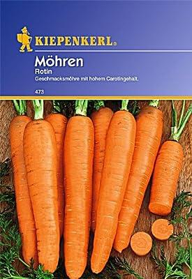 Möhren 'Rotin',1 Portion von Kiepenkerl auf Du und dein Garten