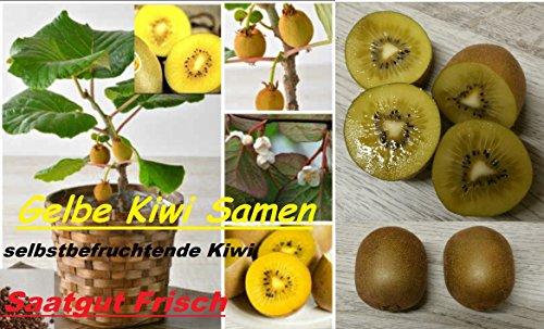 25x Gelbe Kiwi Selbst befruchtend Samen Saatgut Garten Obst Pflanze Rarität Neuheit #108