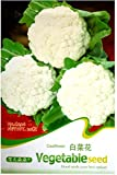 50 Semillas de coliflor Common Classic White - Coliflor - Anual - Brassica Oleracea Var Botry Linn - Semillas en envase original Vegetali - Coliflores