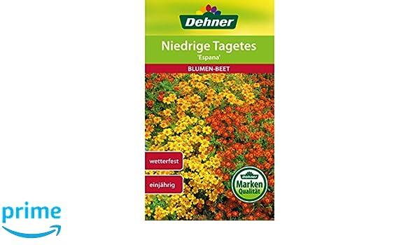 ca 150 Samen Tagetes niedrig reichblühend bunte Mischung