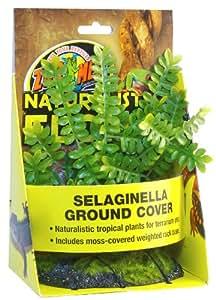 Zoo Med Selaginella Plante en Plastique pour Terrarium
