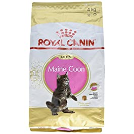 ROYAL CANIN Cibo Secco per Gatti Maine Coon Kitten – 4000 gr