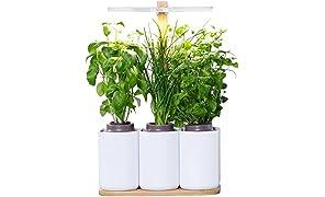 Smart Lilo, le potager d'intérieur autonome Prêt à Pousser BIO - Cultivez toute l'année simplement - inclus basilic, menthe et ciboulette