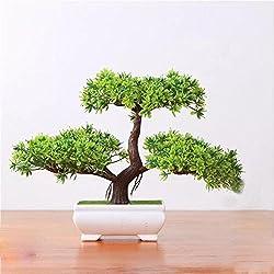 Pflanzen Dekoration Home Hochzeit Lucky Dekoration Deko Pflanze,Feng Shui Deko,Japanischer Pinien,Höhe ca. 20 cm,Green, 12