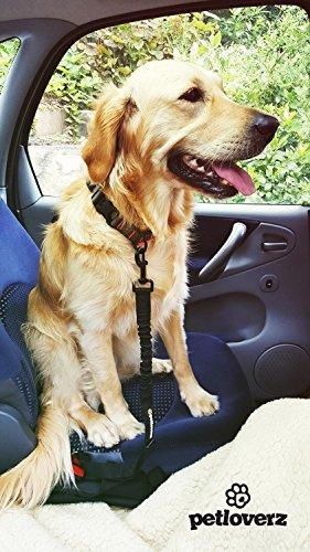 Auto Sicherheitsgurt für Hunde - elastischer Flexi Autogurt Adapter für Hundegeschirr - Verbindungsgurt - Verstellbarer Ruckdämpfer - Sicherheit - Nylon - schwarz - Petloverz -