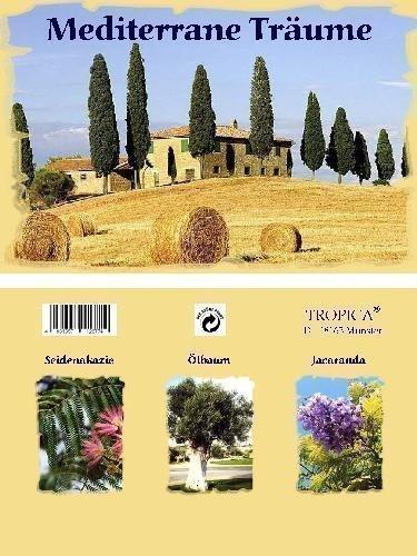 Mini-serre - rêve méditerranéen - avec graines de Jacaranda, olivier et albizzia