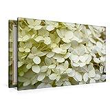 Calvendo Premium Textil-Leinwand 120 cm x 80 cm Quer Weiße Hortensie | Wandbild, Bild auf Keilrahmen, Fertigbild auf Echter Leinwand, Leinwanddruck Hobbys Hobbys