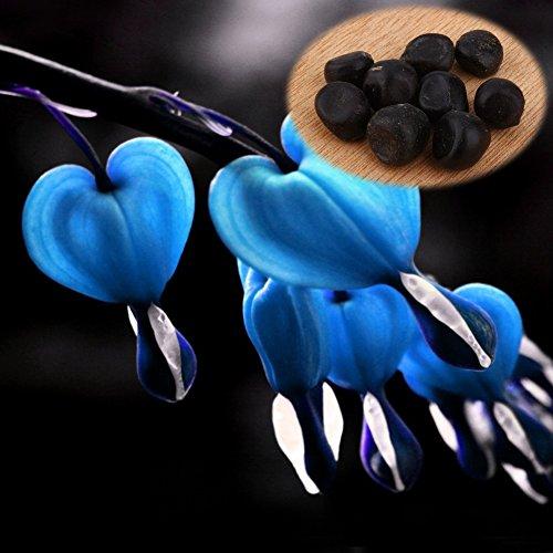 10Pcs Graines de Pivoine Fleurs à planter vivace à Feuilles Herbe Décoration Pour Jardin Maison Gazon ( Couleur : Bleu )