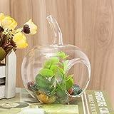 Bazaar Glas Blume Glas Glas Terrarium Micro Landschaft Flaschen aus Glas Dekoration