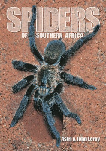 spiders-of-southern-africa