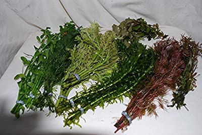 25 Bunched & Weighted Live Aquarium Plants - Collection of Aquatic Plants for your fish tank