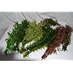 50 Bunched & Weighted Live Aquarium Plants - Aquatic Plants for your fish tank 5