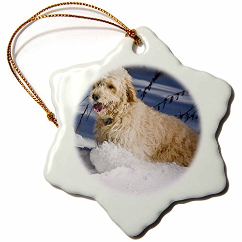 3dRose Goldendoodle, in snow-us32zmu0069-zandria muench beraldo cm, Schneeflocken-Design, Mehrfarbig