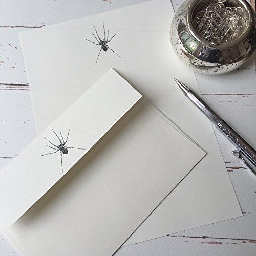 Stelzen (Gattung) Designs Schreibpapier Geschenk-Set mit A Spider Illustration in a Lovely schwarz Box mit Band (wählen Sie von 18oder 36Blatt Qualität Briefpapier und Briefumschläge) Ivory (Cream)