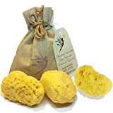 3 IntimateCare Sea Sponges - 100% Natural Mediterranean Silk Sponge - Bleached - Natural Tampon Alternative - Plastic Free Packaging - Biodegradable