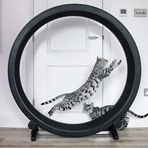 One Fast – Roue d'exercice pour chat, parfait pour les chats énergiques