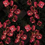 globrite 12x Orchidee Flower Garden Solar Laterne Lichterkette Fairy Lights Lampen
