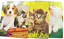 Animal Folder 3 Pack Puppy Kitten Love (Listen Up, Kitten Cuddles, Brotherly Love)