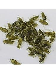 humefor 20pcs suave señuelos Pesca Señuelos Cricket insecto realista cebo señuelos de pesca