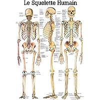 ruediger Anatomie Pa03le Squelette Humain Tableau, français, 70cm x 100cm, papier