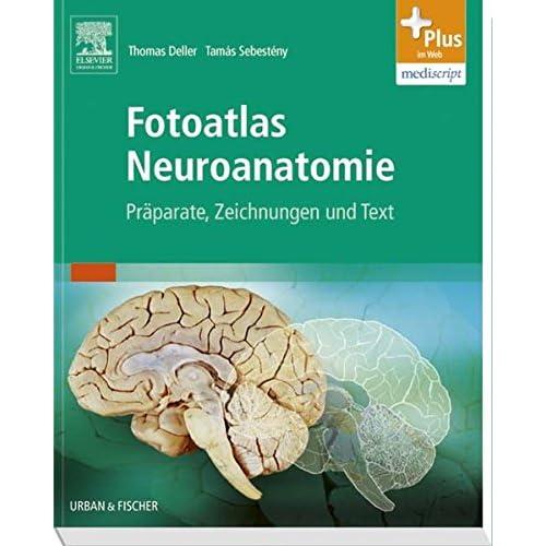 PDF] Fotoatlas Neuroanatomie: Práparate - Zeichnungen und Text - mit ...