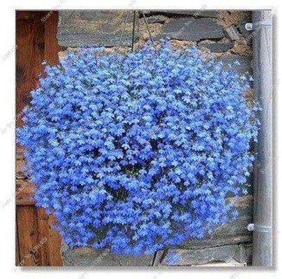 Bleu Fleur de Lin Graine vivace Fleur Graine Quatre Saisons Fleur plantes ornementales tropicales en plein air Bonsai Lin Semilla 100 Pcs 10