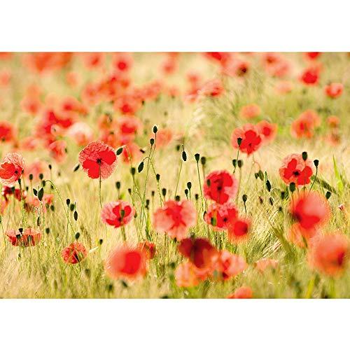 Vlies Fototapete 350x245 cm PREMIUM PLUS Wand Foto Tapete Wand Bild Vliestapete - DREAM OF POPPIES - Romantik Mohn Feld Blumen Gras - no. 070