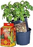 Floragard Floragard Potato Pot Set • Inhalt: 1x Floragard AKTIV Tomaten- und Gemüseerde 20l, 1x Potato-Pot, 1x Pflanzkartoffeln • leckere Kartoffeln aus eigenem Anbau