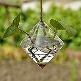 Rosepoem Terrarium Pflanzen Hanging Glas Clear Rhombus Form Pflanze Aufhänger Air Plant Halter Container Terrarien aus Glas für Blumen Pflanzen Hausgarten Wand Dekor