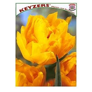 Keyzers Tulpe Monte Carlo 12 Stück Zwiebelumfang 12/+