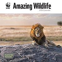 2020 Calendar WWF Amazing Wildlife Plastic Free 12 X 12 Inches