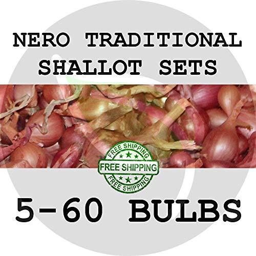Semi: 30: Nero Scalogno di Semi Set - Giardino Semi, moltiplicatore cipolle Semina scalogni
